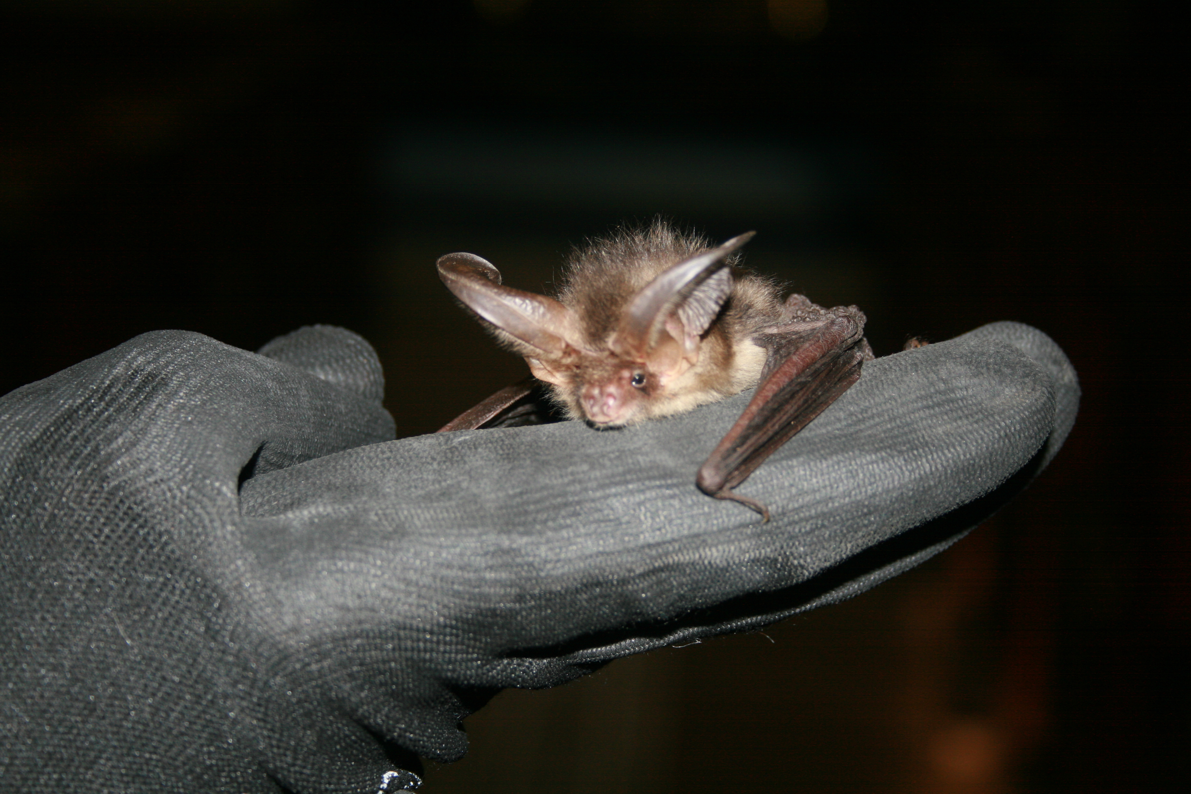 Wildscapes bat surveys