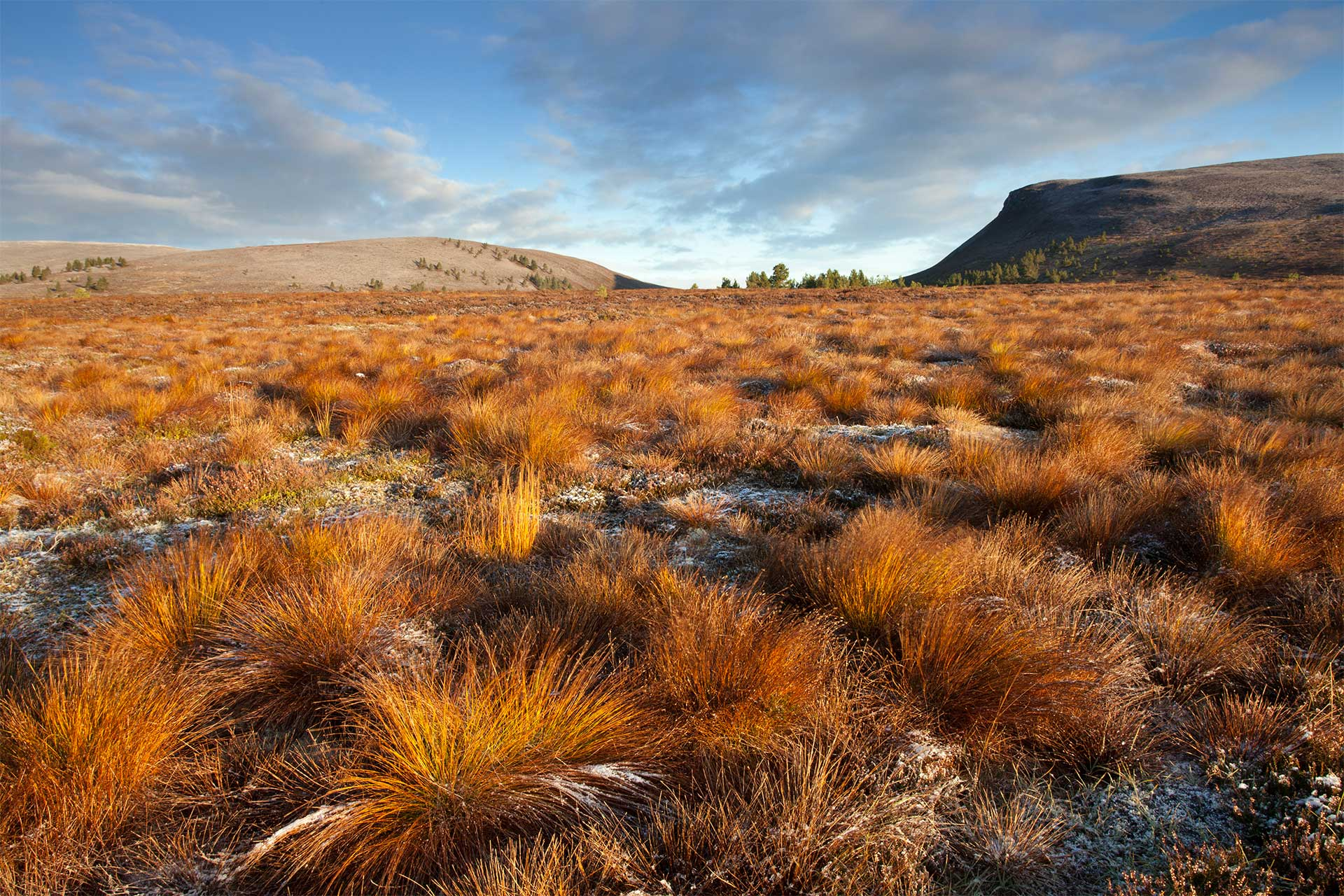 Moorland conservation work by Wildscapes