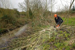 Scrub clearance by the Wildscapes team