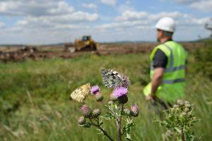 Creating new natural habitats