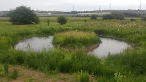 Wildscapes pond creation